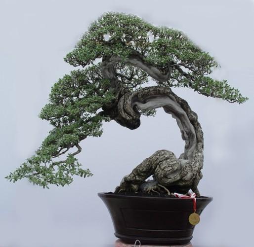 Bonsai 05