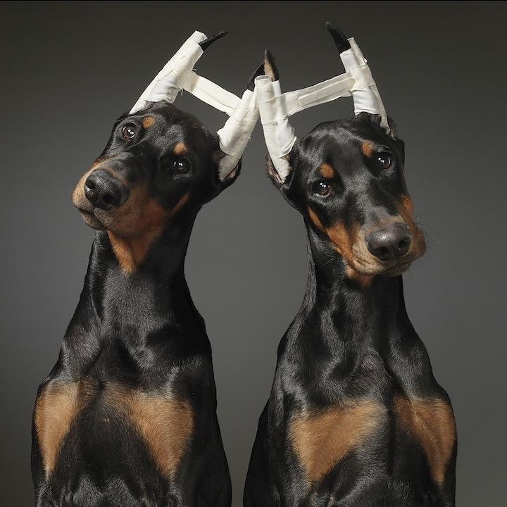 Cães que merecem uma olhada 10