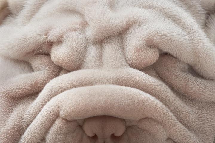 Cães que merecem uma olhada 12