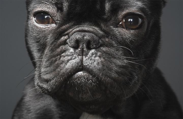 Cães que merecem uma olhada 13