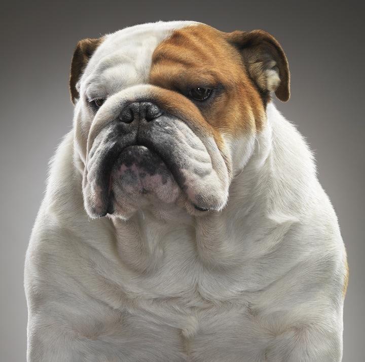 Cães que merecem uma olhada 14