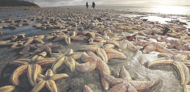 50 mil estrelas do mar mortas