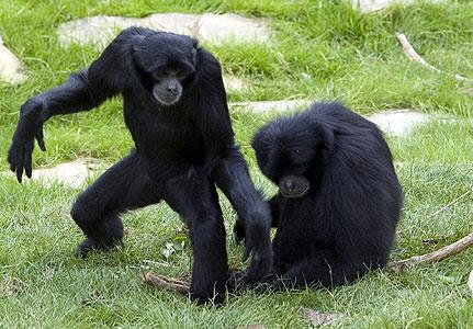 Animais monogâmicos