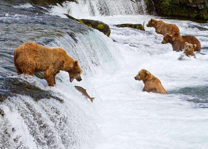 As melhores fotografias do mundo animal de 2010 02