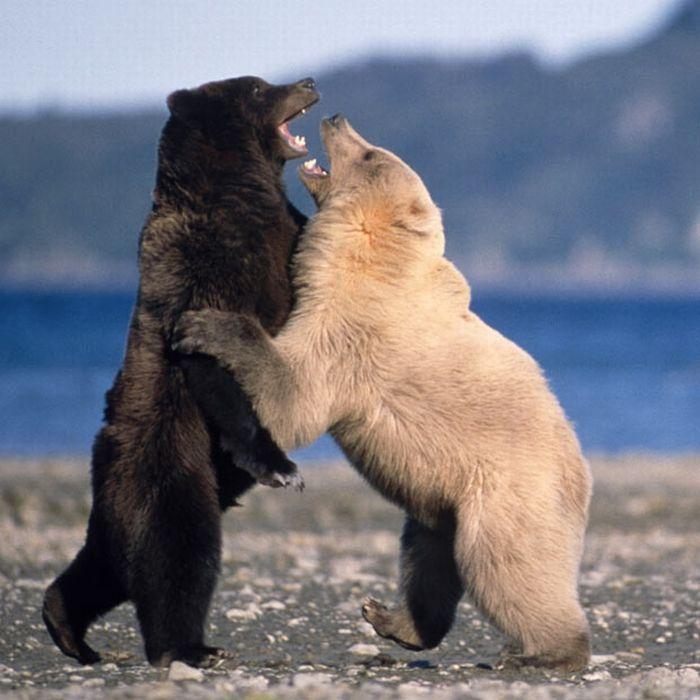 As melhores fotografias do mundo animal de 2010 05