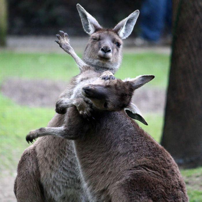 As melhores fotografias do mundo animal de 2010 06