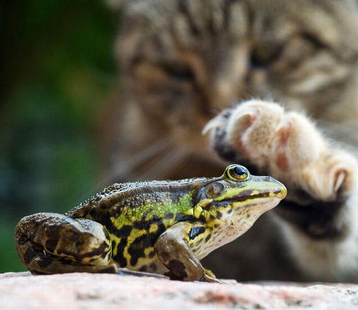 As melhores fotografias do mundo animal de 2010 07