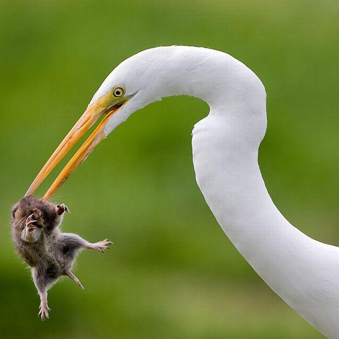 As melhores fotografias do mundo animal de 2010 11