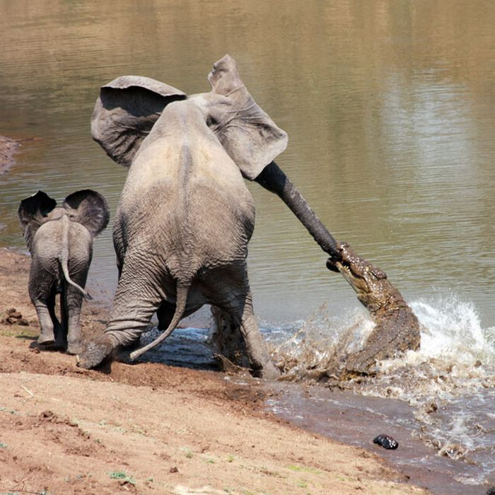 As melhores fotografias do mundo animal de 2010 12