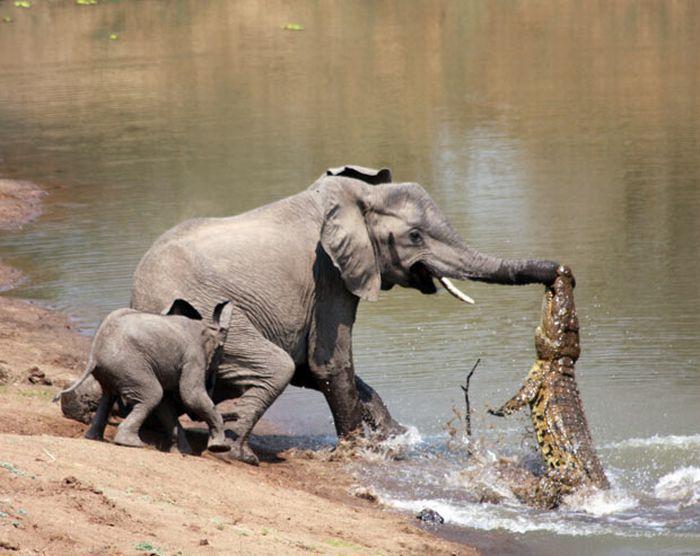 As melhores fotografias do mundo animal de 2010 13