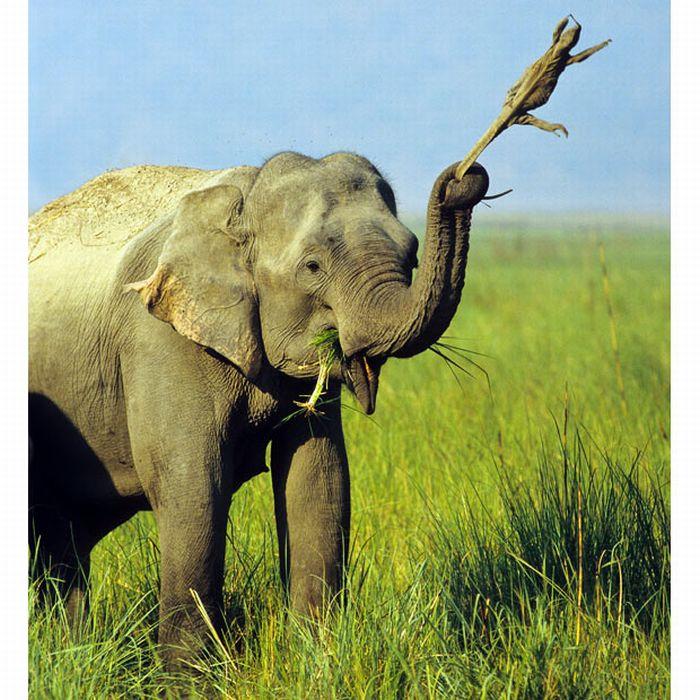 As melhores fotografias do mundo animal de 2010 14