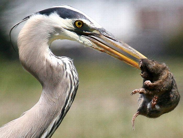 As melhores fotografias do mundo animal de 2010 17