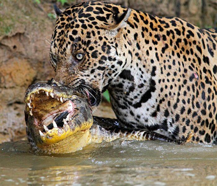 As melhores fotografias do mundo animal de 2010 18
