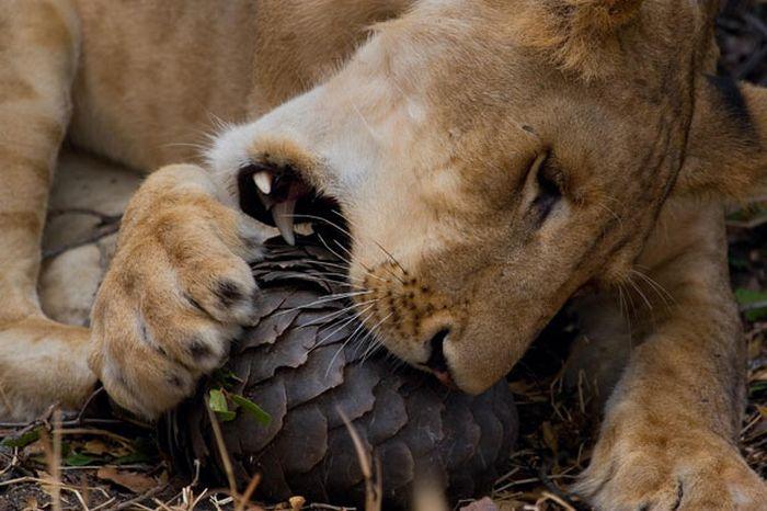 As melhores fotografias do mundo animal de 2010 20