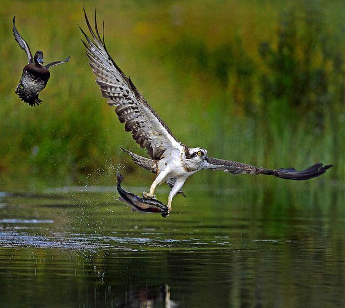 As melhores fotografias do mundo animal de 2010 22