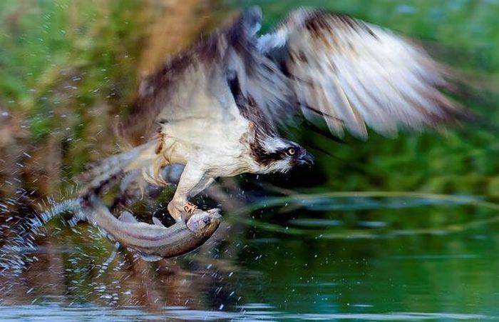 As melhores fotografias do mundo animal de 2010 23