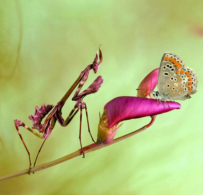 As melhores fotografias do mundo animal de 2010 25
