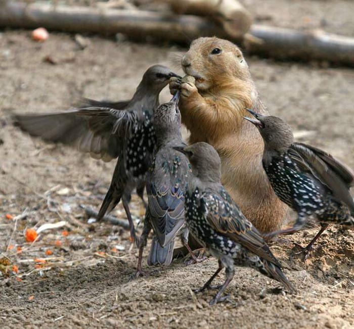 As melhores fotografias do mundo animal de 2010 26