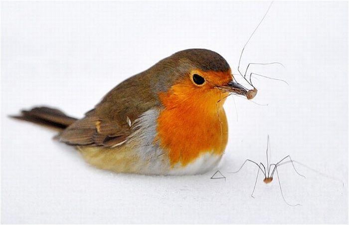 As melhores fotografias do mundo animal de 2010 27