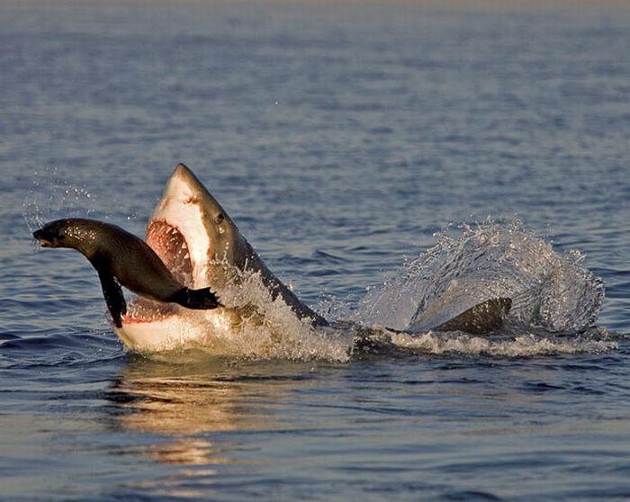 As melhores fotografias do mundo animal de 2010 28