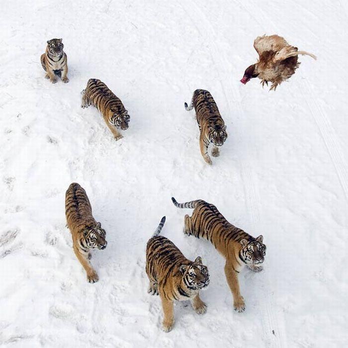 As melhores fotografias do mundo animal de 2010 29