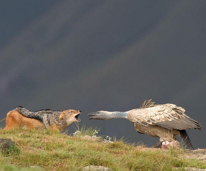 As melhores fotografias do mundo animal de 2010 30