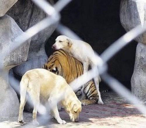 Animal bem alimentado