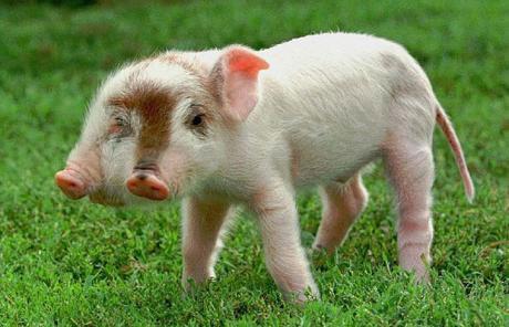 10 animais com deformidades