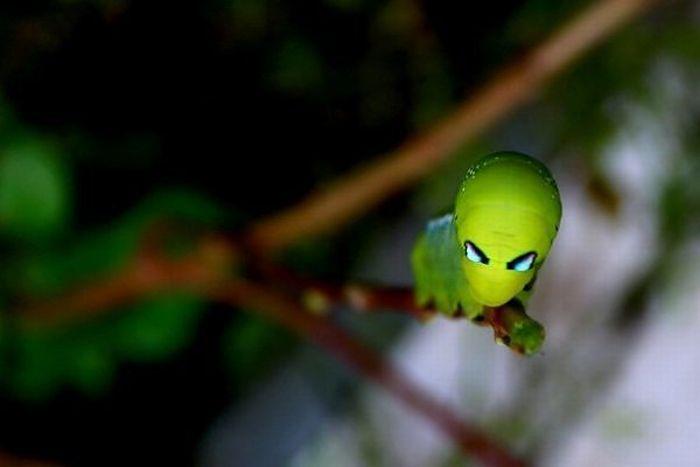 Alienígenas no quintal da sua casa