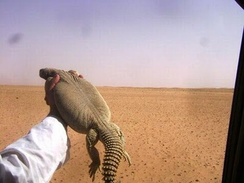 Caçador de lagartos