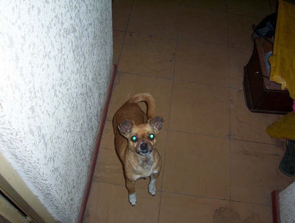 Cão 24