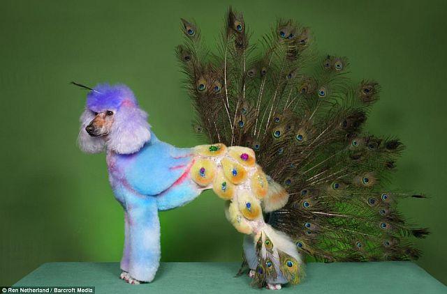 Cães fantasiados