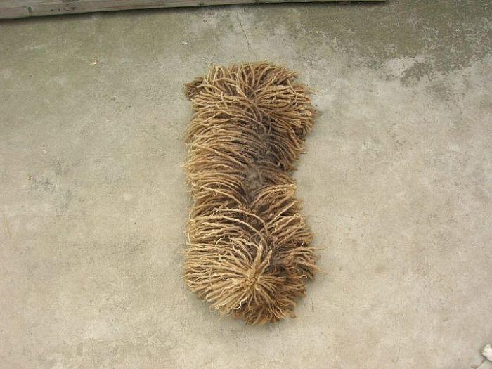 Cão ou vassoura?