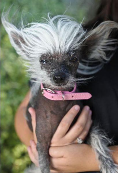O cão mais feio do mundo - 2010
