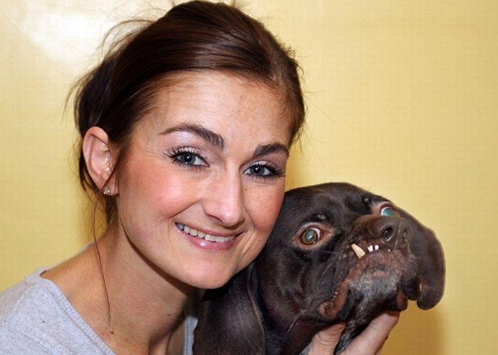 O cão mais feio da Inglaterra foi adotado 02