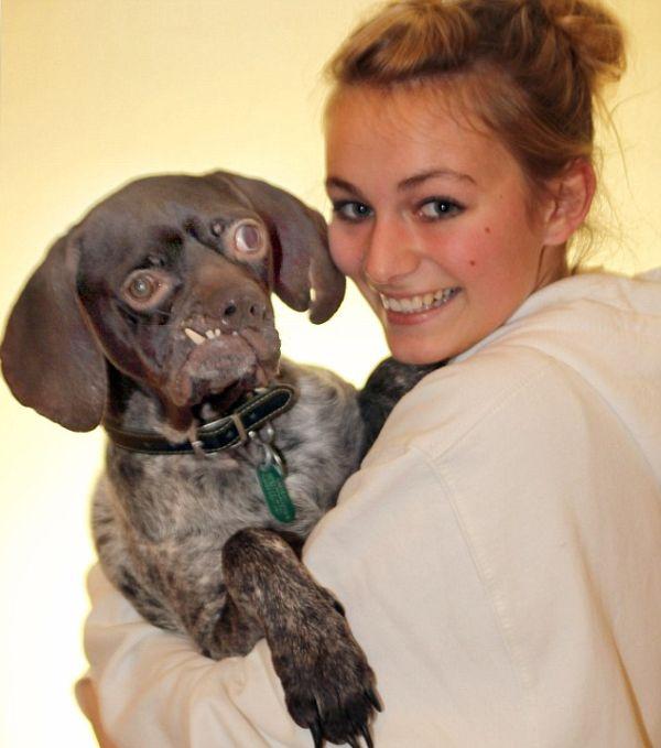 O cão mais feio da Inglaterra foi adotado 03