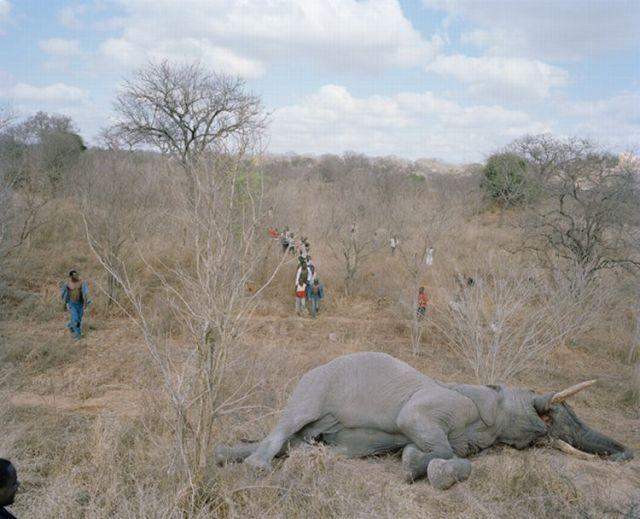 Elefante, prato do dia