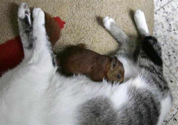Esquilo Adotado