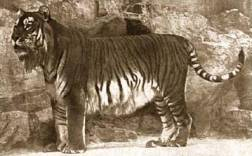 Top 10 animais extintos