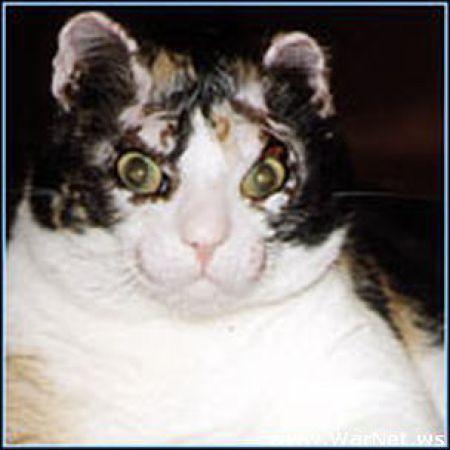Scarllet, a gata heroina