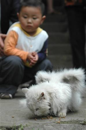 Gato chinês com asas
