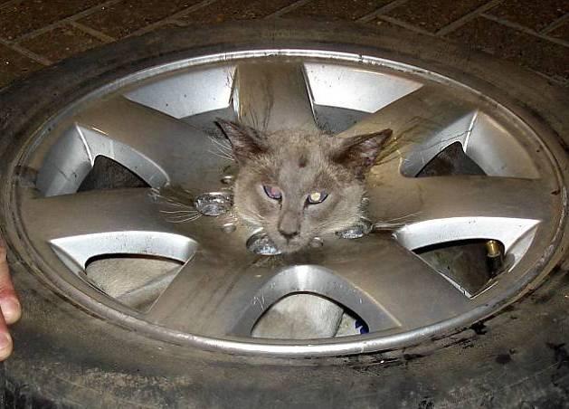 Um gato muito metido