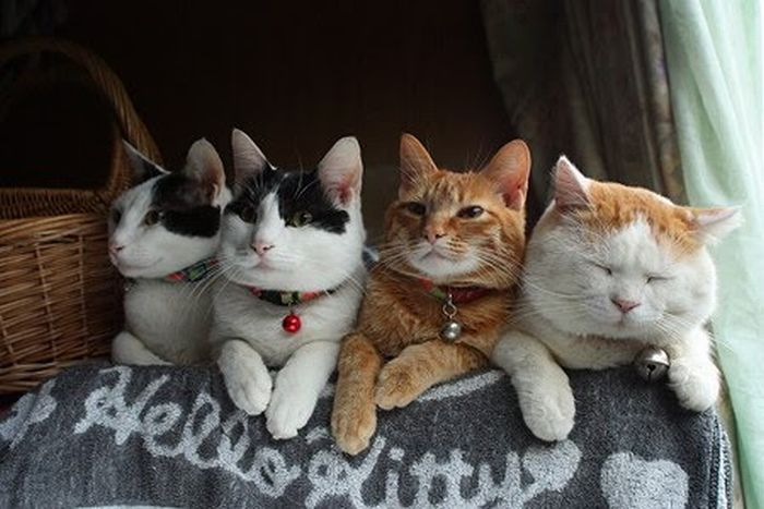 O gato mais relaxado e feliz do mundo