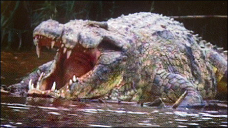 Crocodilo Gustave