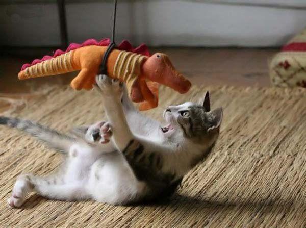 Jacaré vs Leão, luta de titãs