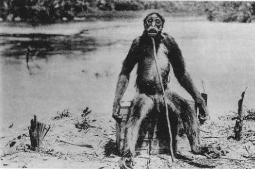 Homem macaco venezuelano