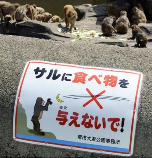 Não alimente os macacos