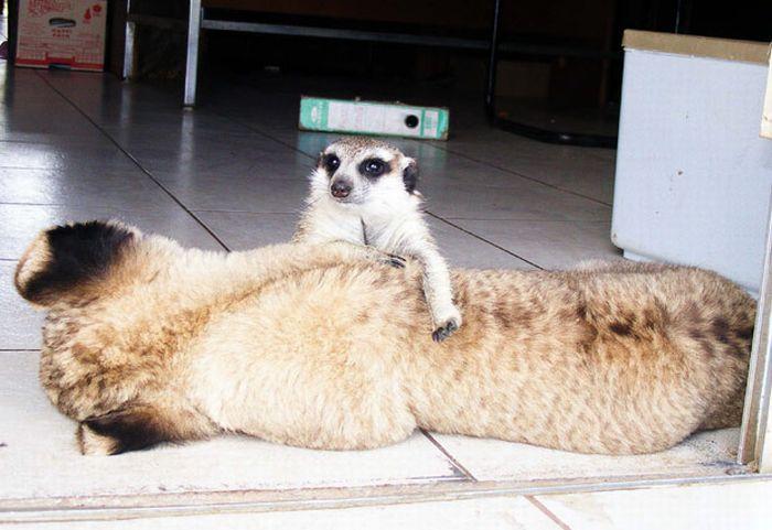 Tim�o e Simba da vida real