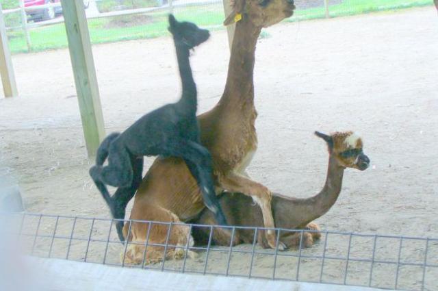 Outros motivos para você nao levar as crianças ao zoológico