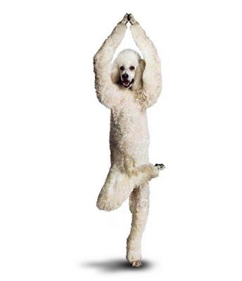 Atenção: cães desestressando